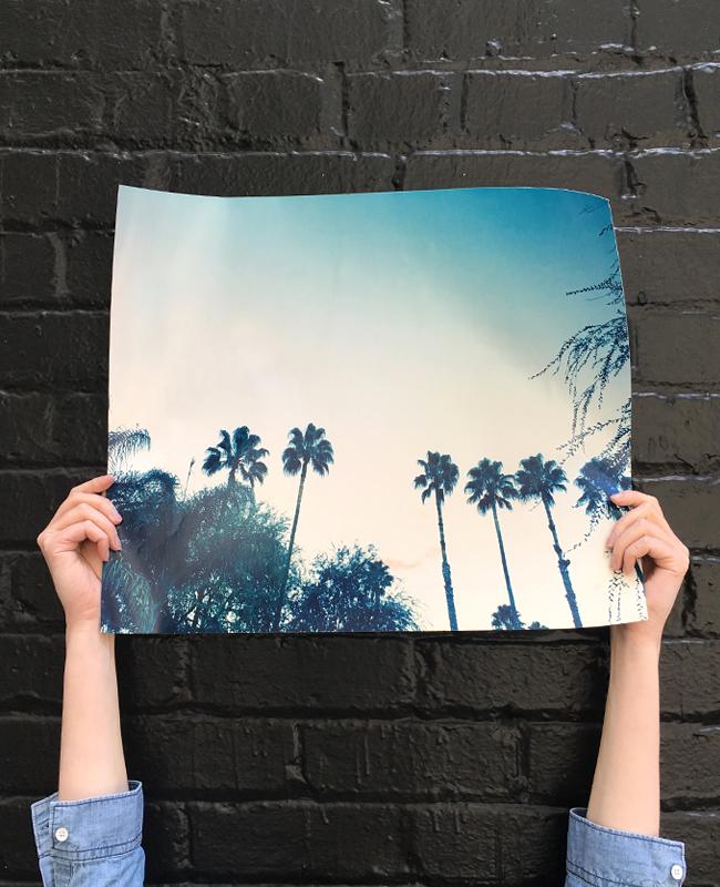 palm-photo