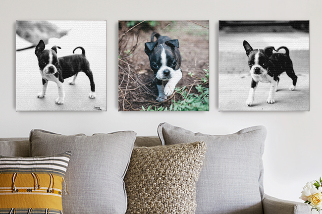 pet-gifts-canvas