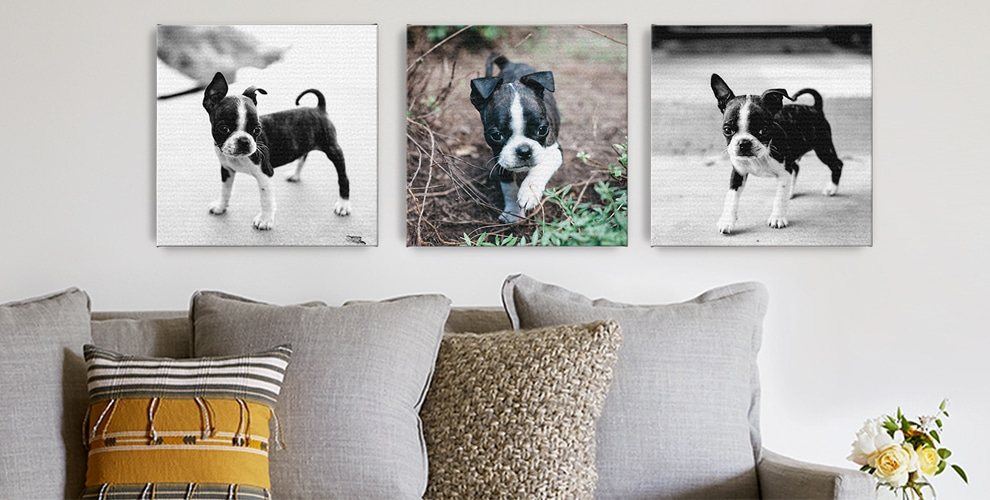 10 quick gift ideas for the pet lovers in your life the snapfish blog