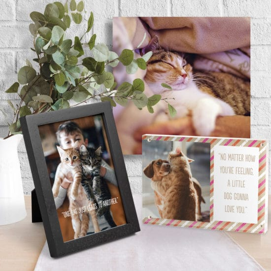 Picture your pets on these cute photo gifts
